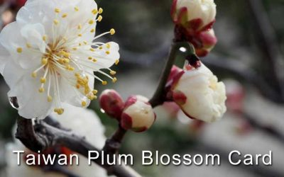 Taiwan Investment Plum Blossom Card